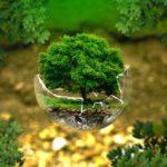 økologi