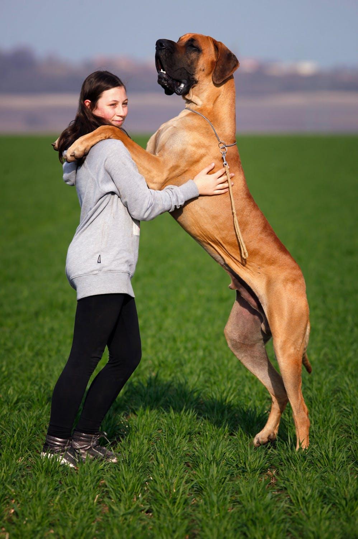 En meget stor hund