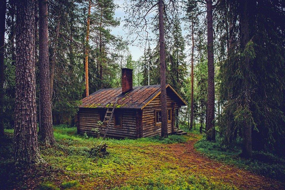 Bjælkehytte i skov