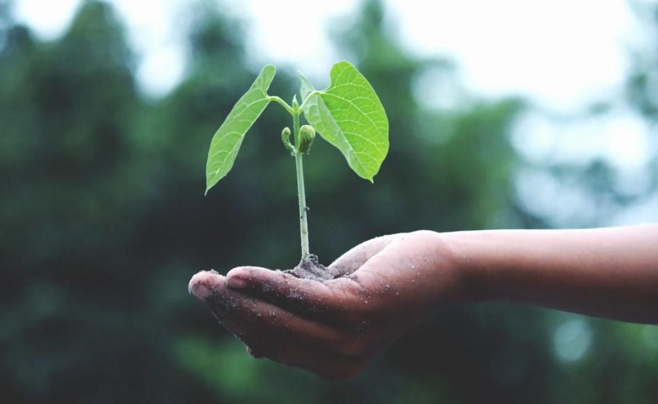 Tre grundregler for et bæredygtigt og sundt liv