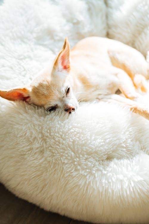 Sovende_hund