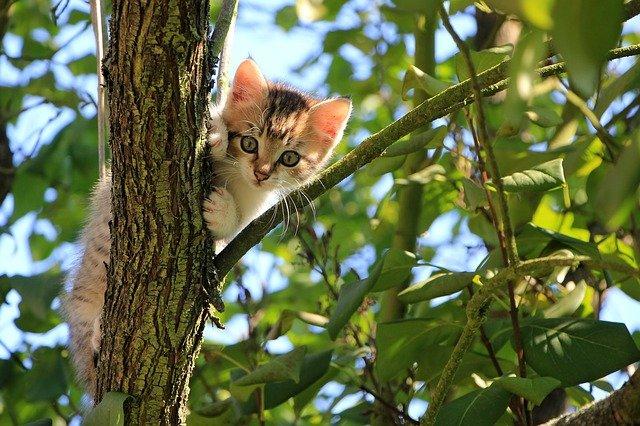 Sådan passer du på din kat i sommeren på en miljørigtig måde