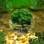 Bevaring af natur