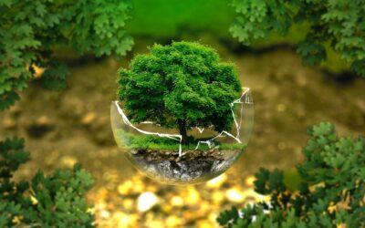 Sådan kan du implementere en bæredygtig tankegang i dit eget liv