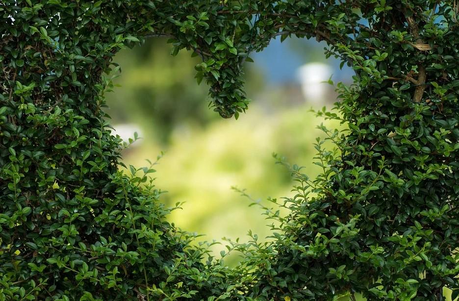 hjerte af blade